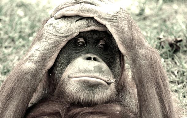 yo mono reseña